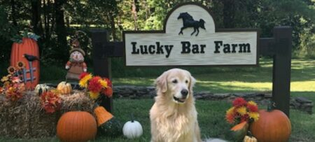 lucky bar farm sign with a golden retriever in front